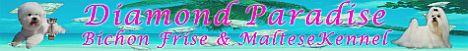 Hodowla Dimond Paradise