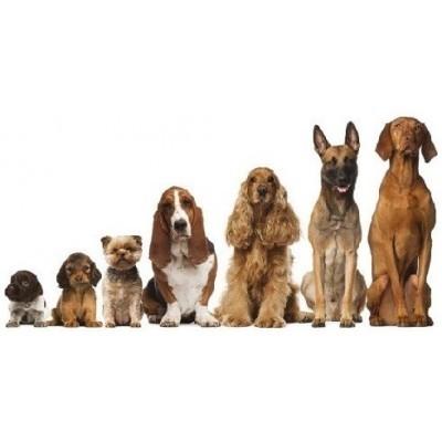Próbki karm dla psów