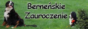 Hodowla Berneńskie zauroczenie