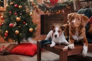 W czasie świąt psy nie świętują
