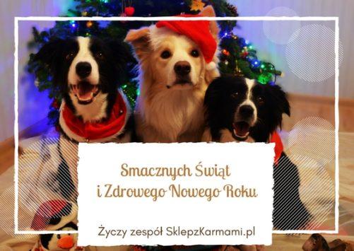 Smacznych Świąt i Zdrowego Nowego Roku życzy zespół SklepzKarmami.pl