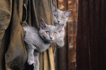 Toksoplazmoza: koty a ciąża