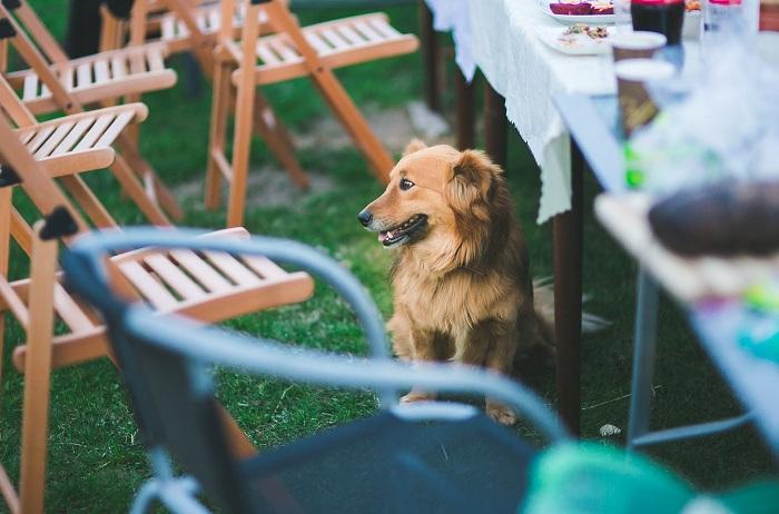 Dieta eliminacyjna – nietolerancje pokarmowe u psów i kotów